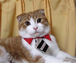 [CEO  BUSINESSMAN CAT III SAYS]