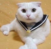 [Mayor Sailor Suit Cat says]